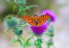 Vlinder die op bloem in evenwicht wordt gehouden royalty-vrije stock afbeeldingen