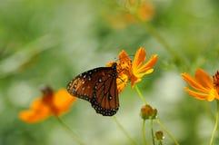 Vlinder die op bloem in evenwicht wordt gehouden Stock Afbeeldingen