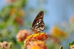 Vlinder die op bloem in evenwicht wordt gehouden Royalty-vrije Stock Fotografie