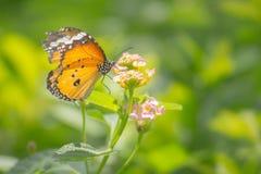 Vlinder die op bloem neerstrijken stock foto's