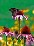 Vlinder die op bloem rust Royalty-vrije Stock Afbeelding