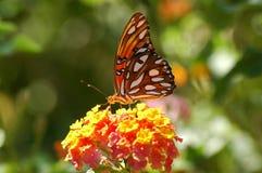 Vlinder die op bloem wordt neergestreken Stock Afbeelding
