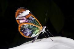Vlinder die op rots wordt neergestreken Royalty-vrije Stock Foto's
