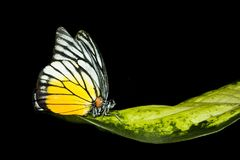 Vlinder die op verlof rust Royalty-vrije Stock Afbeeldingen