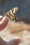 Vlinder die op vinger rusten Stock Foto's