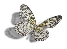 Vlinder die op Wit wordt geïsoleerdv Royalty-vrije Stock Afbeeldingen