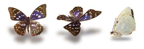 Vlinder die op Wit wordt geïsoleerdv Royalty-vrije Stock Foto's