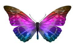 Vlinder die op Wit wordt ge?soleerdv veelkleurig insect tropisch dier Malplaatje voor ontwerp stock fotografie