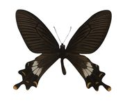 Vlinder die op witte achtergrond wordt geïsoleerdr royalty-vrije stock foto