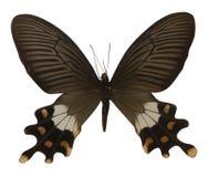 Vlinder die op witte achtergrond wordt geïsoleerdr stock afbeelding