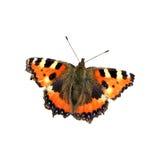 Vlinder die op witte achtergrond wordt geïsoleerdr Royalty-vrije Stock Fotografie