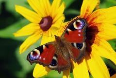 Vlinder, die van bloem vliegt Stock Foto