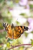 Vlinder die vlucht neemt Royalty-vrije Stock Foto's