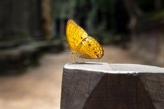 Vlinder die zich op houten pijler bevinden royalty-vrije stock afbeelding