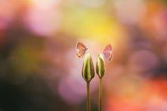 vlinder, dieren, macro Stock Foto