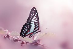 Vlinder, dieren, macro, bokeh, insect, aard, stock foto's