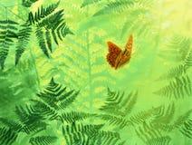 Vlinder Donkergroene Fritillary, Argynnis-aglaja in gras vector illustratie