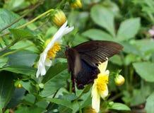 Vlinder in Dujiang-Dam sicuan chengdu Royalty-vrije Stock Foto