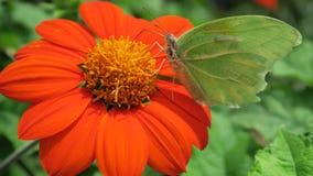 Vlinder in een bloem Stock Foto's