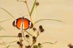 Vlinder in een bloem Royalty-vrije Stock Afbeelding