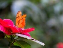 Vlinder in een bloem Royalty-vrije Stock Afbeeldingen