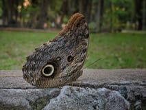 Vlinder in een bos met vage achtergrond Royalty-vrije Stock Afbeeldingen