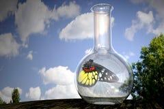 Vlinder in een fles Stock Foto