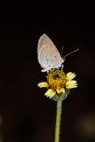 Vlinder in een gele bloem Stock Foto's