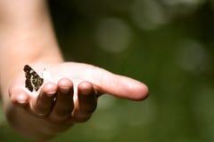 Vlinder in een hand Stock Fotografie