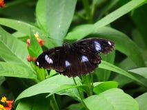 Vlinder en aard 13 Royalty-vrije Stock Afbeelding