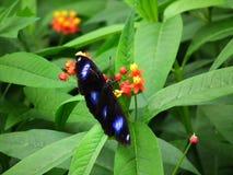 Vlinder en aard Stock Foto's