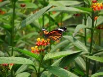 Vlinder en aard Royalty-vrije Stock Foto