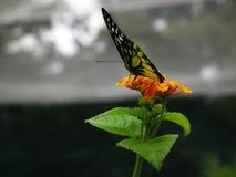 Vlinder en aard Stock Afbeelding