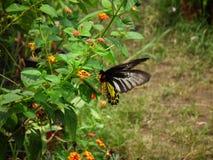 Vlinder en aard Stock Afbeeldingen