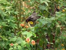 Vlinder en aard Royalty-vrije Stock Afbeeldingen