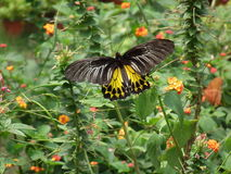 Vlinder en aard 5 Stock Foto