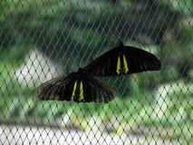 Vlinder en aard 6 Stock Afbeelding
