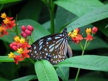 Vlinder en aard 7 Stock Fotografie