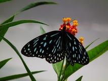 Vlinder en aard 9 Royalty-vrije Stock Foto's
