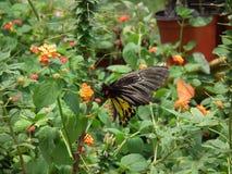Vlinder en aard 12 Stock Foto's