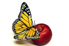 Vlinder en appel Royalty-vrije Stock Foto's
