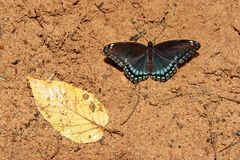 Vlinder en Blad Royalty-vrije Stock Fotografie