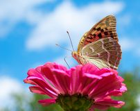 Vlinder en blauwe hemel Stock Foto's