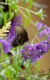 Vlinder en bloei royalty-vrije stock afbeelding