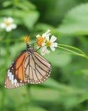 vlinder en bloeiende bloemen Stock Afbeeldingen