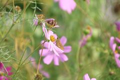 Vlinder en bloem Royalty-vrije Stock Afbeeldingen