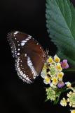 Vlinder en bloem Royalty-vrije Stock Foto's