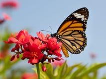 Vlinder en bloem Stock Afbeeldingen