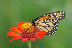 Vlinder en bloem royalty-vrije stock afbeelding