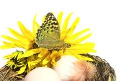 Vlinder en bloemen Stock Afbeelding